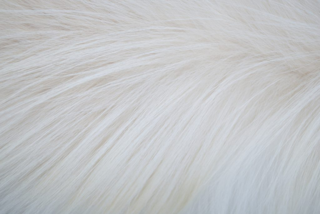 otf_dog_hair_01