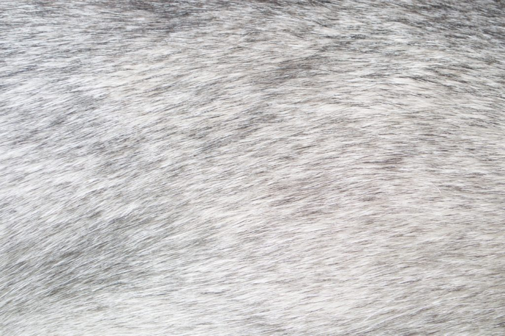 otf_dog_hair_05